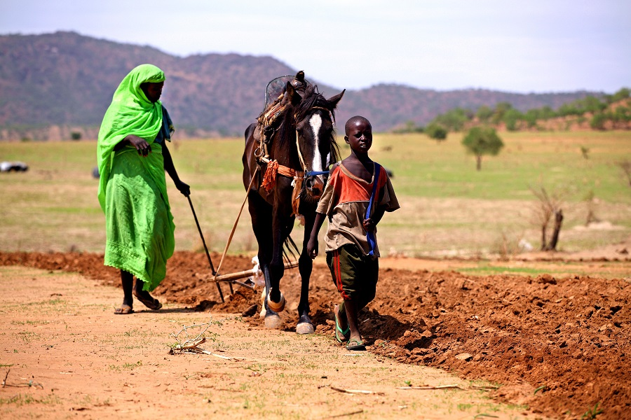 Woman ploughing in Chad